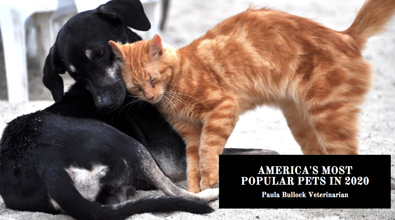 Paula Bullock Veterinarian Counts Down America's Most Popular Pets In 2020