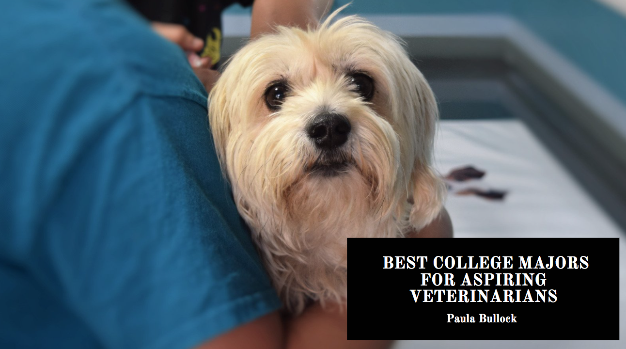 Paula Bullock Looks at Best College Majors for Aspiring Veterinarians